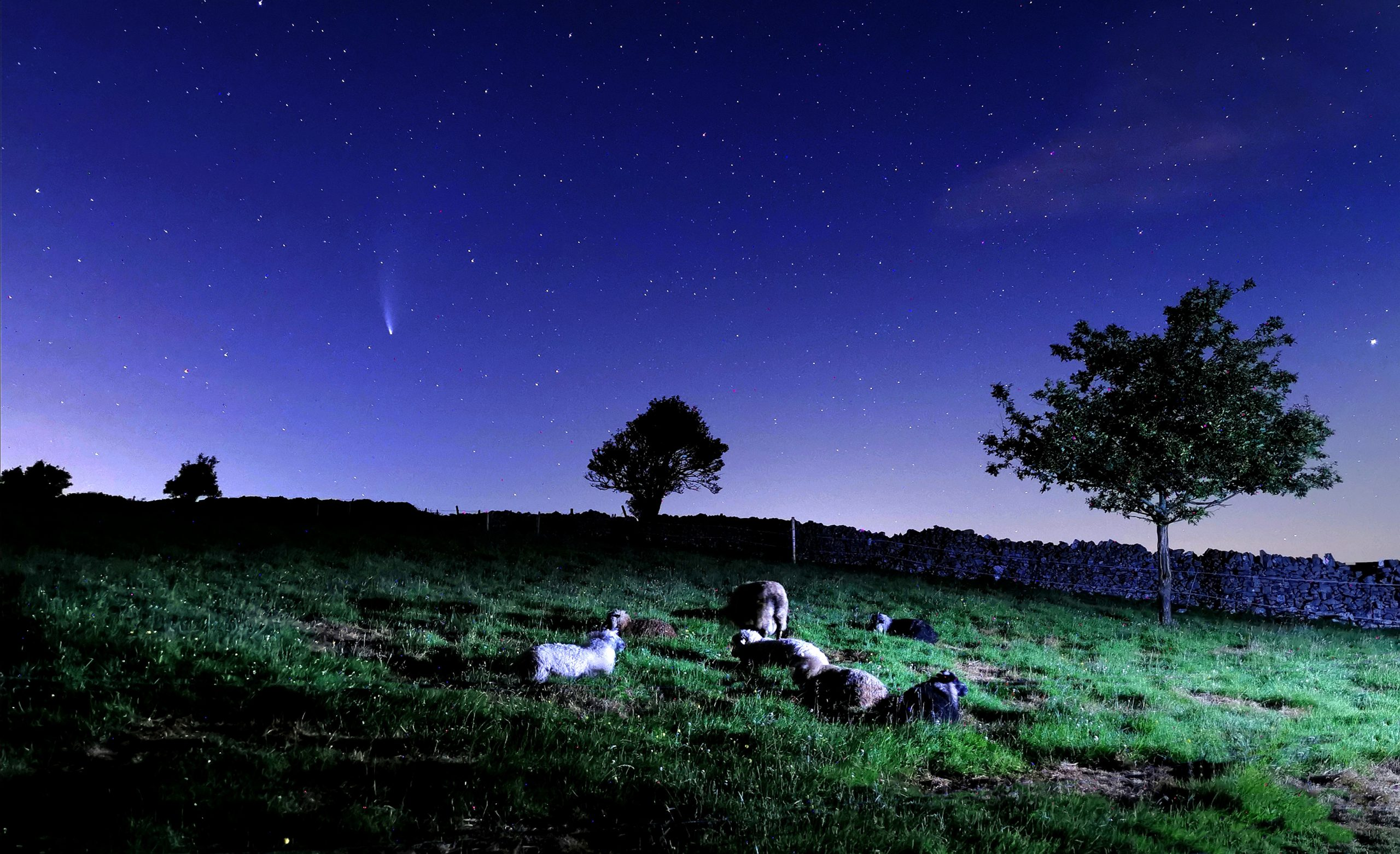 Rob Eavis Photo 2 - Uilleam surround by his lambs, under Comet Neowise
